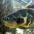 просто рыбка
