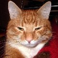 Шумахер,   любимый кот.