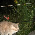 Есения на ночной охоте