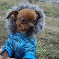 любимый гламурный пёс:)