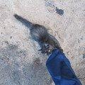 Котенок с московского депо. Прибежал к сыну.