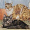 две кошечки,   одна тряпочная подушка,   другая натуральная Люська)))
