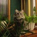 Сонька в домашних джунглях