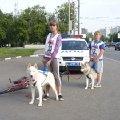 Велопробег до Сочи,  собачки в пути при пересечени МКАД