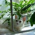 помогите назвать кошечку)))