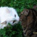 Тимофей и Гаврик.