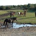 Лошадки в Абхазии (путешествие хаски-клуба)