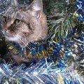Фотографировались под елочкой,  на улице.Ленточка поздравляет всех с Новым годом и Рождеством)