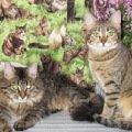 кот Степан и кошка Лялька - январь 2012