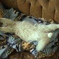 Библос спит...