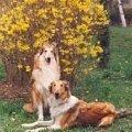 Весна в Ташкенте - весна в жизни моей Адели..с подружкой