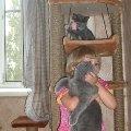Дочь - 4 года,   Марс - 4 мес.,   наверху наша гостья Катюша - примерно 3 мес.