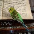 Кешуня решил выучить ноты. :))