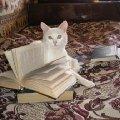 а ещё василий очень любит читать