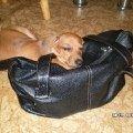 Ники-любительница чужих сумок и кошельков.