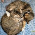 Мама с дочкой - и обоих зовут Сонька!