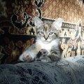 Я не котенок- я тигрррр