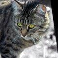 Даже в обычной деревенской кошке есть неповторимый шарм и грация...