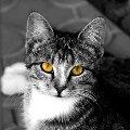 Кошечка с янтарными глазами
