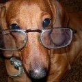 очень умная собачка!  ?