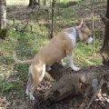Гоша любит длительные прогулки по лесу.