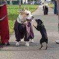 Ну дай я тебя поцелую!