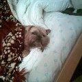 Данила спит и Даня на подоконнике(тоже спит)=)