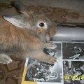 Это мой Семик.Я читала журнал,   Семик подбежал ко мне,   в это время я решила сфотографировать его,   читающего журнал!  :))