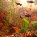 Мой аквариум с рыбками.