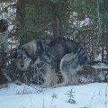 Хорошо зимой в лесу
