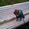 Осень на скамейке