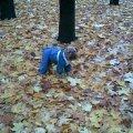 Осень,   осень...приходиться одеваться...