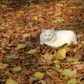 Хорошо осенью!