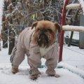 зимой хорошо и на горке покататься:):):):):)