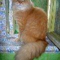 Последнее лето нашего любимого кота Тома