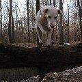 Развлекаемся в лесу