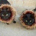 два льва - Василий и Маркиз