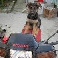 мотоциклист - Арес