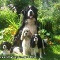 Почти семья