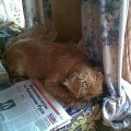 где только Даня не любит поспать!  :):):):):)(НА даче и на столе:):):):):))