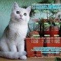 Токмакский городской центр защиты животных (рекламные постеры,   производство арт-студии Diamant )