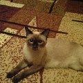 Красавица кошка Кузя!