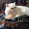 Меняю апельсин на ROYAL CANIN.