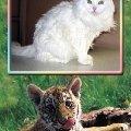 Это с виду я белая кошка,  а внутри меня живет настоящая тигрица!