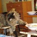Кот ворюга.............