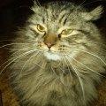 Злость кота......