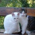 очаровательные дворовые кошечки
