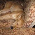 Герда спит,  добрая,   пугливая душа..