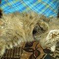 Наш Любимец спит......