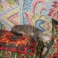 мы спим с опрокинутой головой (ну просто нет сил держать столько ума!  )<br /> звать нас Крыска (Мурка)